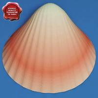 seashell conchiglia 3d model