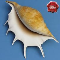 Seashell Lambis Lambis