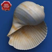 Seashell Tonna