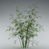 Bamboo_garden_bush_01