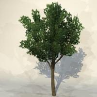 Tree_n_04.zip