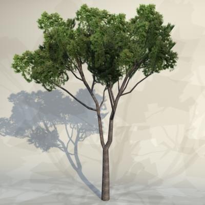Tree_059_1.jpg