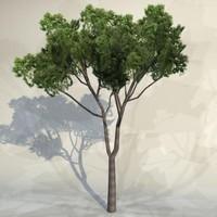 Tree_059.zip