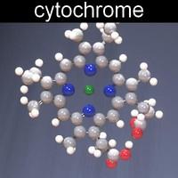 molecule cytochromes max