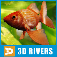 goldfish fish 3d obj