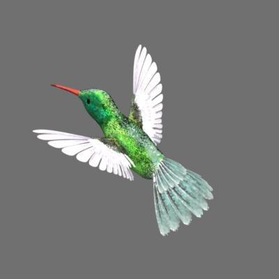 hummingbird_01.jpg