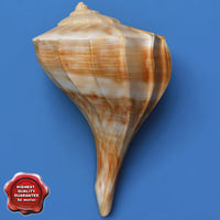 seashell left opening conch 3d model