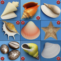 3d seashells sea shell model