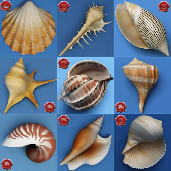 Seashells_Collection_V2_00.jpg