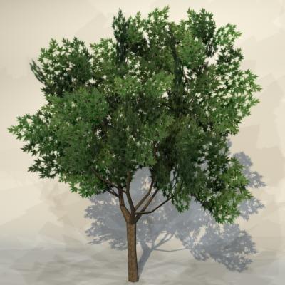 Tree_04_1.jpg