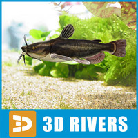 Black bullhead by 3DRivers