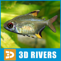 lemon tetra fish 3d model