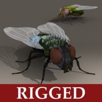 rigged fly max