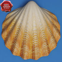 clam seashell 3d model