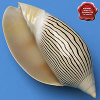 seashell amoriaellioti 3d model