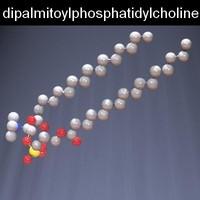 dipalmitoylphosphatidylcholine