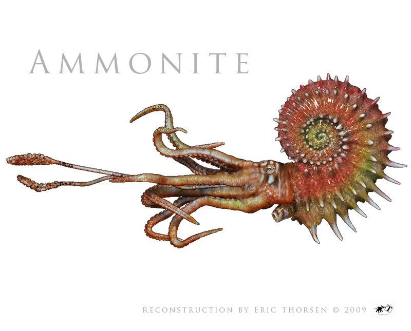 Ammonite-1-white.jpg
