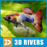 3d 3ds guppy fish