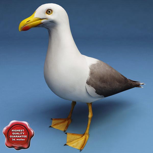 Gull_00.jpg