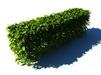 hedge plant 3d model