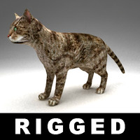 rigged cat 3d model