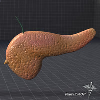 Pancreas External