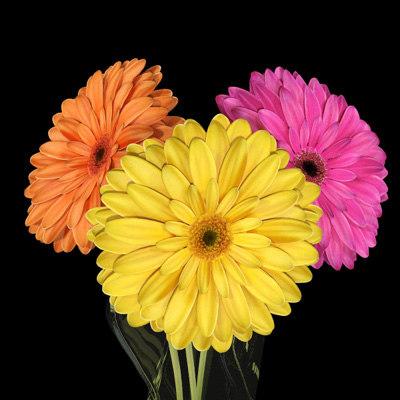 daisies_r2_01.jpg