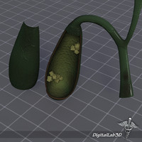 3d model gall bladder anatomy