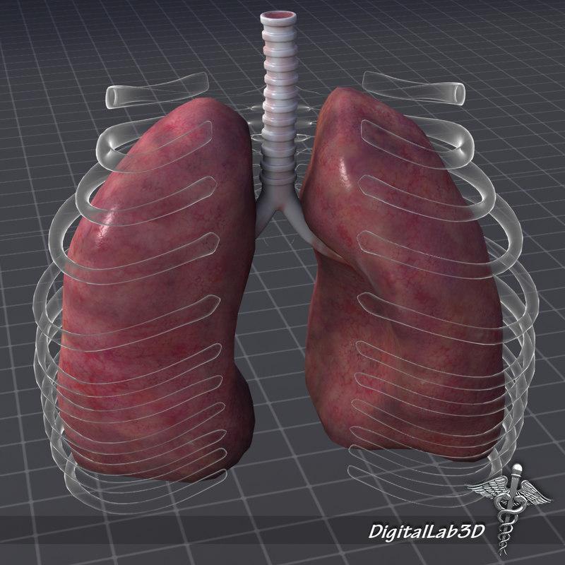 DL3D_LungsExternal3.JPG