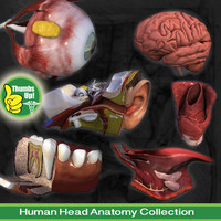 Head Anatomy Collection