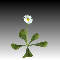 daisy plant flower 3d model
