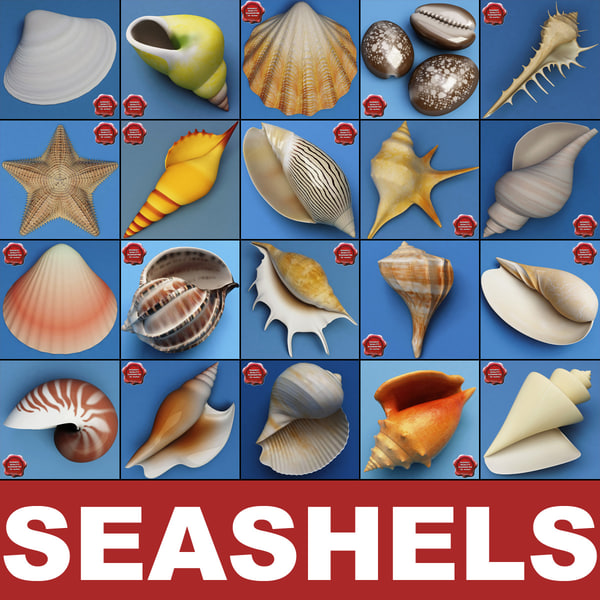 Seashells_Collection_V3_00.jpg