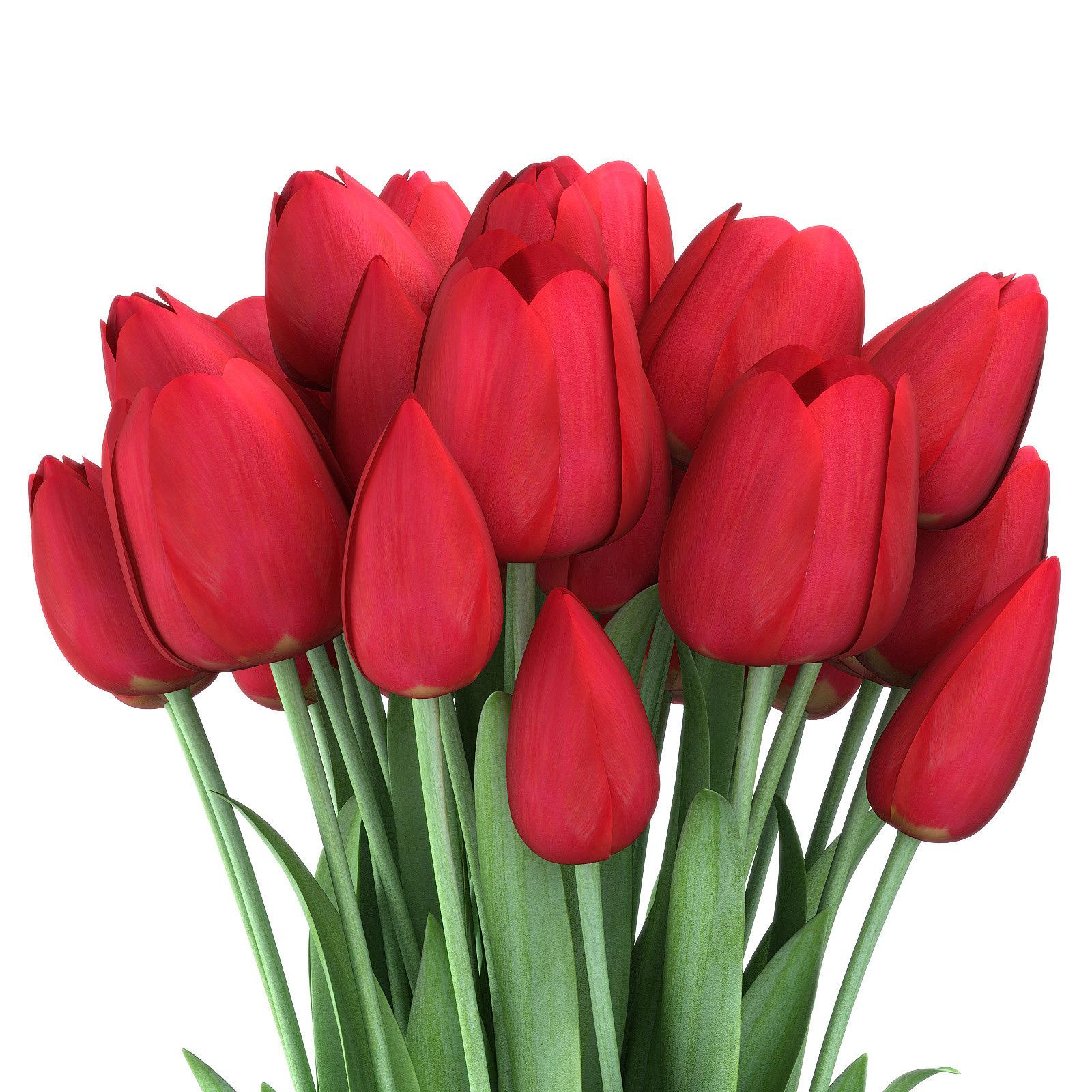 Tulips_3_red.jpg