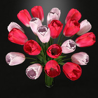 Plant Tulips In Vase Pink And White