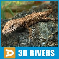 Lizard by 3DRivers