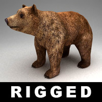 3ds max rigged bear