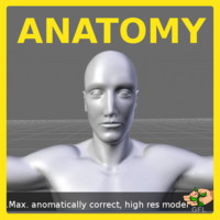 Max- Male Anatomy
