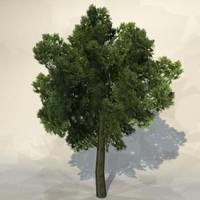 pc tree 3d model