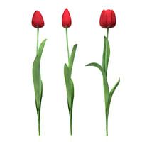 tulips piece 3d model