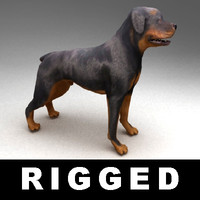 rigged rottweiler 3d model