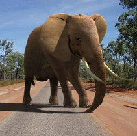 3d model of elephant superb