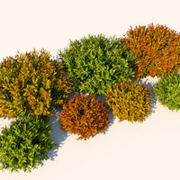 nandina bushes plants 3d model