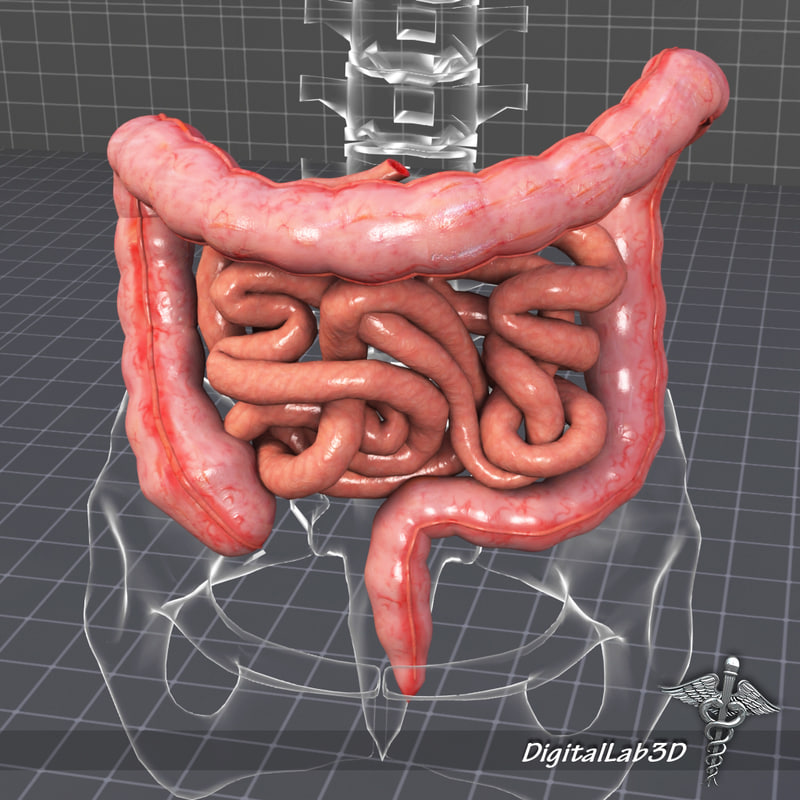 DL3D_Intestines_1.JPG