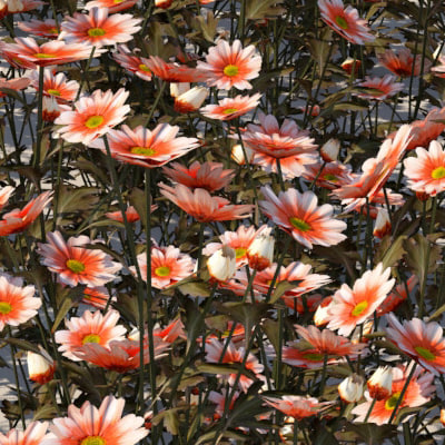 Plant Landscaping Daisies