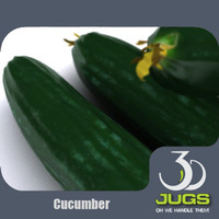 3d model cucumber vegetables mr