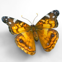3d butterfly painted lady