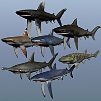 sharks blue cat 3d model