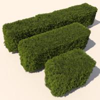 Plant Cedar Hedge