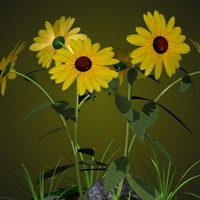 3d black eyed susan