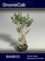 3d bamboo shrub real model